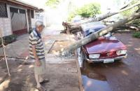 Chuva forte derruba 6 árvores e poste cai sobre Variant de 42 anos em Campo Grande
