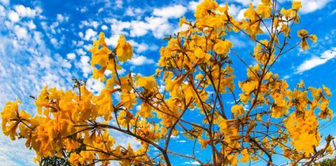 Sábado será céu claro, baixa umidade do ar e máxima de 32°C em MS