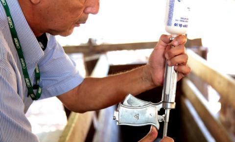 Iagro define calendário de vacinação contra febre aftosa em Mato Grosso do Sul
