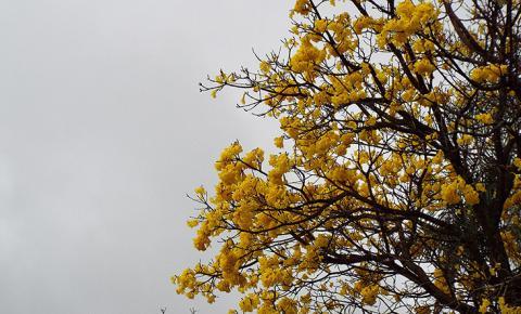 Quinta-feira de tempo firme e temperaturas em queda no Mato Grosso do Sul