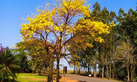 Como será o clima durante a primavera em Mato Grosso do Sul?