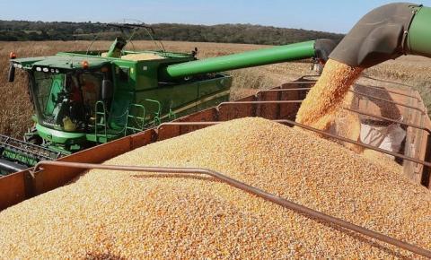 Com potencial de um país, MS é o 14º maior produtor de milho do mundo