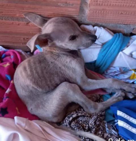 Mulher é indiciada e leva multa de R$ 4 mil ao abandonar casa e deixar 5 cães e galinhas sem comida em MS